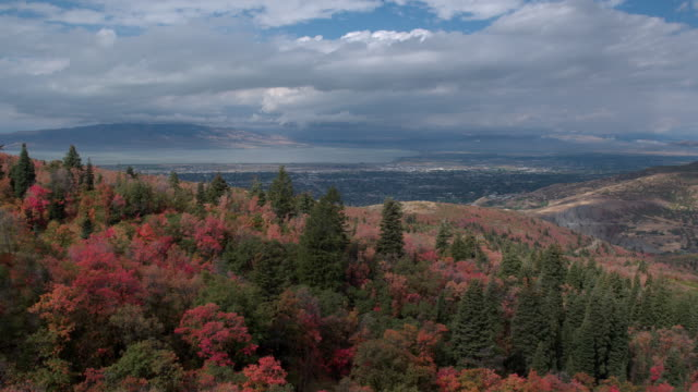 aerial view over colorful foliage flying towards city and lake - provo stock videos and b-roll footage