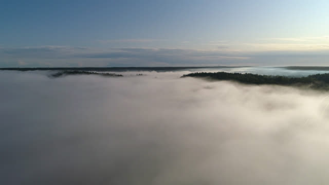 aerial view over foggy rural landscape - pine tree stock videos & royalty-free footage