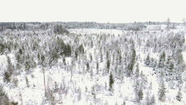 Aerial view over forest