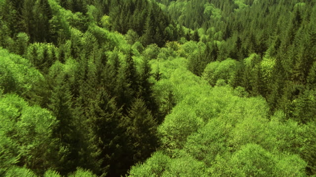 aerial view over forest - 硬木の木点の映像素材/bロール