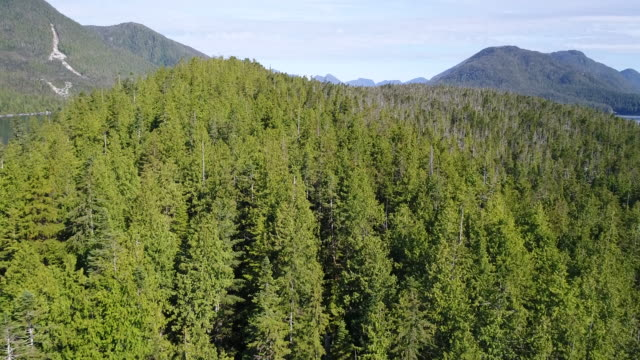 aerial view over great bear rainforest coastline - wildnis stock-videos und b-roll-filmmaterial