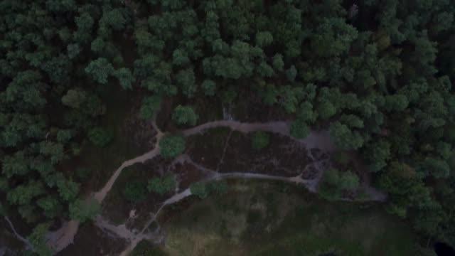 aerial view over green wetlands - リフレクション湖点の映像素材/bロール