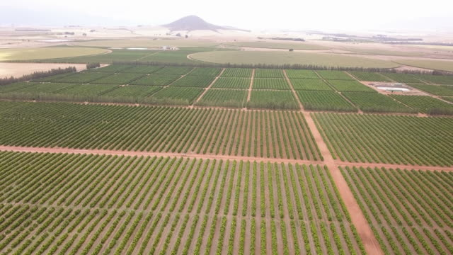aerial view over huge citrus farm - grove stock videos & royalty-free footage