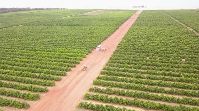 luftblick über die riesige zitrusfarm - obstgarten stock-videos und b-roll-filmmaterial