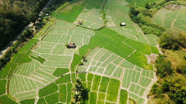 aerial view over of green agriculture in countryside at mae hong son province in thailand - rice paddy stock videos and b-roll footage