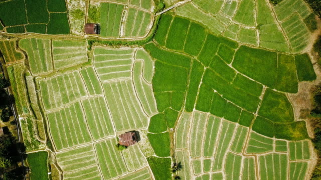 aerial view over of green agriculture in countryside at mae hong son province in thailand - mae hong son province stock videos and b-roll footage