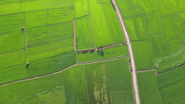 aerial view over of green rice paddy in countryside - rice paddy stock videos and b-roll footage