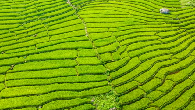 aerial view over terraced rice paddies at morning in thailand - rice terrace stock videos and b-roll footage