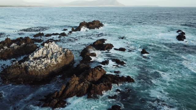 南アフリカの美しい海岸線を空撮 - 海洋性の鳥点の映像素材/bロール