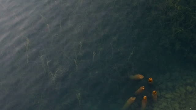 aerial view over the lake - tropical fish stock videos & royalty-free footage