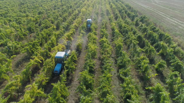 夏のブドウ畑の上空写真。作物の豊富さ。農業活動。土壌を肥やします。 - ぶどう点の映像素材/bロール