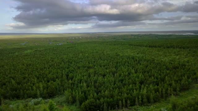 Vista aérea sobre el espeso pinar sobre las copas de los árboles