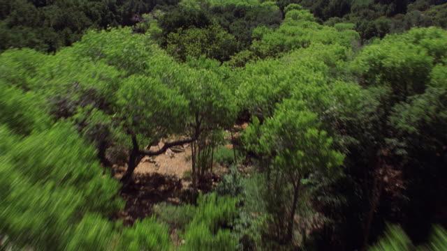 aerial view over trees and brushy hillside - 硬木の木点の映像素材/bロール