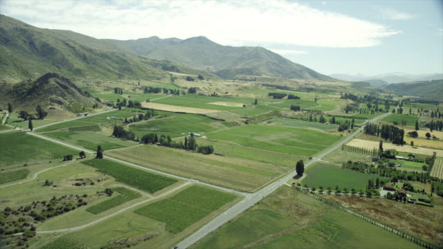 Aerial view over vineyard