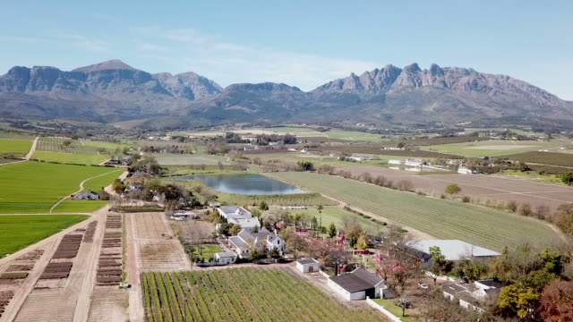 aerial view over vineyards and wine farm - cape town stock videos & royalty-free footage