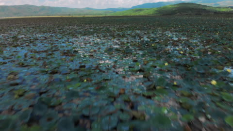 aerial view panning above water lilies on lake azuei - lily stock videos & royalty-free footage