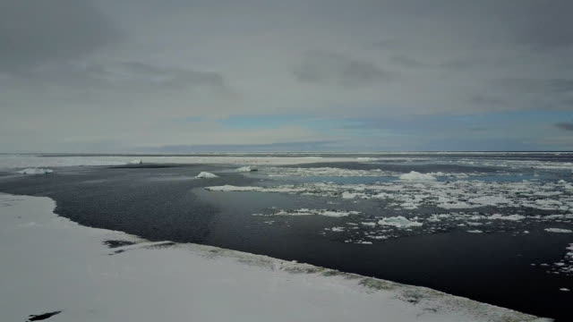 aerial view panning shot of sea ice and the ice floe edge with some sea birds in the background, admiralty inlet, northern baffin island, canada. - ホンケワタガモ点の映像素材/bロール