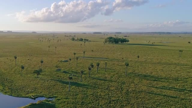 aerial view, paragliding near valizas creek and castillos lagoon, rocha department, uruguay - uruguay stock-videos und b-roll-filmmaterial