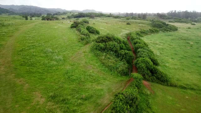 aerial view: passing over green fields with dirt track & horses grazes - moving past stock videos & royalty-free footage