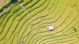 Aerial view rice field rice terrace
