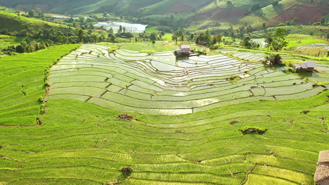 vidéos et rushes de vue aérienne rizières terrasses sur la montagne belle lumière du soleil - thaïlande