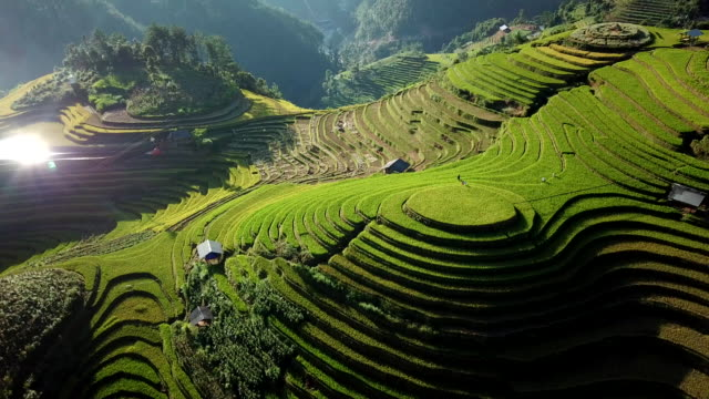 vídeos de stock e filmes b-roll de aerial view rice field terraces panoramic hillside with rice farming on mountains - indonesia