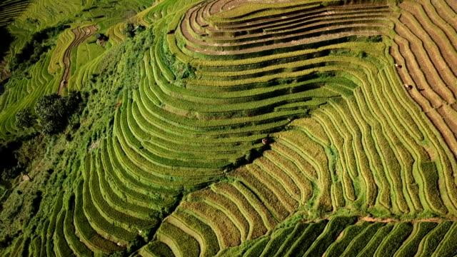 auf der luft blick reis-feld terrassen panoramablick hügel mit reisanbau auf den bergen - terrasse grundstück stock-videos und b-roll-filmmaterial