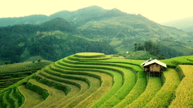 aerial view rice field terraces panoramic hillside with rice farming on mountains - cultures stock videos & royalty-free footage