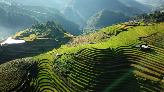 aerial view rice field terraces panoramic hillside with rice farming on mountains - sa pa stock videos and b-roll footage