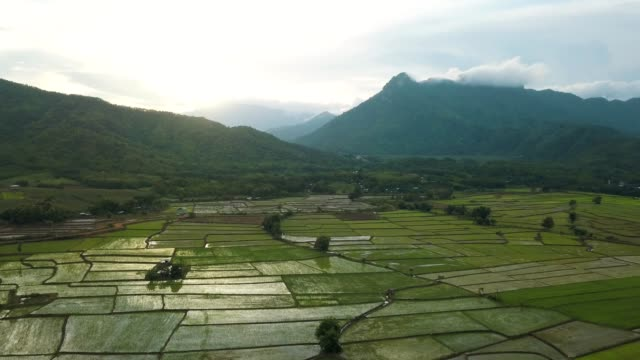 Aerial view : Rice paddy and agricultural land in Thailand