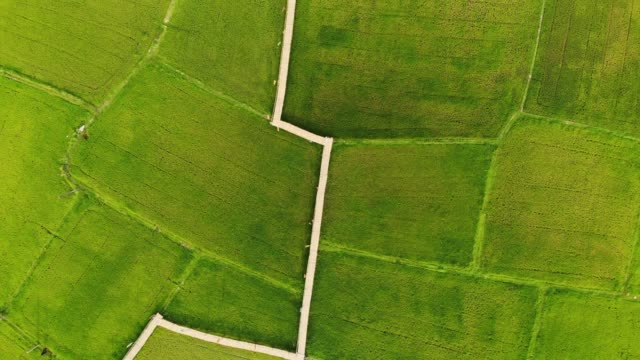 aerial view rice terrace fields in northwest of thailand - satoyama scenery stock videos & royalty-free footage