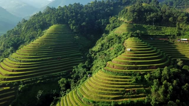 aerial view rice terrace fields  in northwest vietnam, harvest season rice paddy fields at mu cang chai, yen bai province, vietnam - sa pa stock videos and b-roll footage