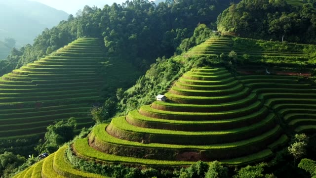 aerial view rice terrace fields  in northwest vietnam, harvest season rice paddy fields at mu cang chai, yen bai province, vietnam - rice terrace stock videos and b-roll footage