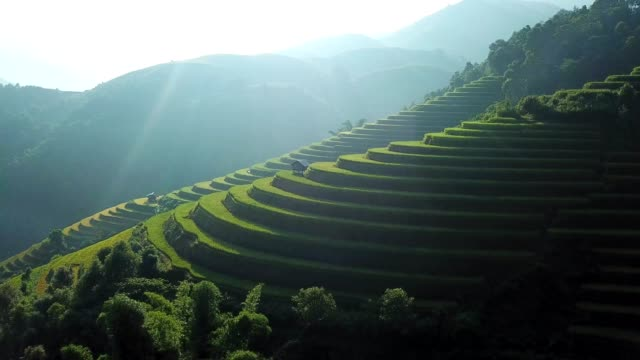 aerial view rice terrace fields  in northwest vietnam, harvest season rice paddy fields at mu cang chai, yen bai province, vietnam - bali stock videos & royalty-free footage