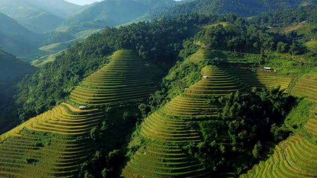 aerial view rice terrace fields  in northwest vietnam, harvest season rice paddy fields at mu cang chai, yen bai province, vietnam - myanmar stock videos and b-roll footage