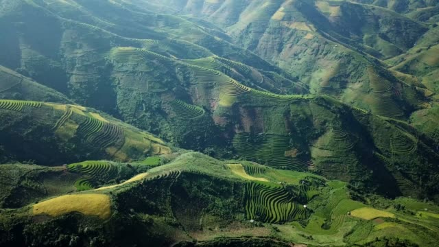 aerial view rice terrace fields  in northwest vietnam, harvest season rice paddy fields at mu cang chai, yen bai province, vietnam - philippines stock videos & royalty-free footage