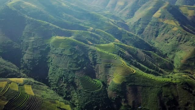 aerial view rice terrace fields  in northwest vietnam, harvest season rice paddy fields at mu cang chai, yen bai province, vietnam - north vietnam stock videos & royalty-free footage
