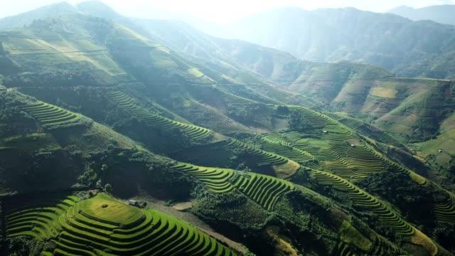 aerial view rice terrace fields  in northwest vietnam, harvest season rice paddy fields at mu cang chai, yen bai province, vietnam - cambodia stock videos & royalty-free footage