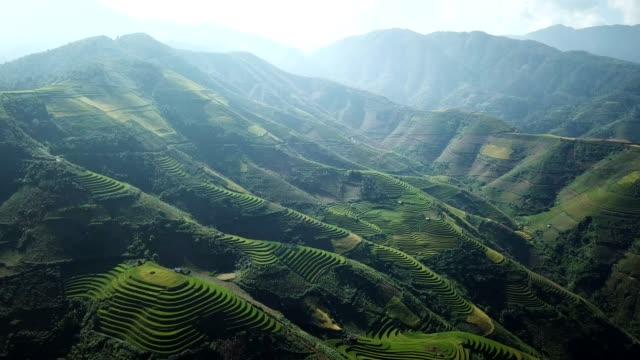 aerial view rice terrace fields  in northwest vietnam, harvest season rice paddy fields at mu cang chai, yen bai province, vietnam - cultivated land stock videos & royalty-free footage