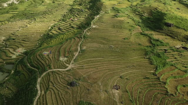 Aerial view Rice terraces of farm on hilly or mountainous terrain,Beautiful landscape view of rice terrace in Mu cang chai at Vietnam , Agriculture Harvest paddy fields terraces is farming traditional in southeast Asia