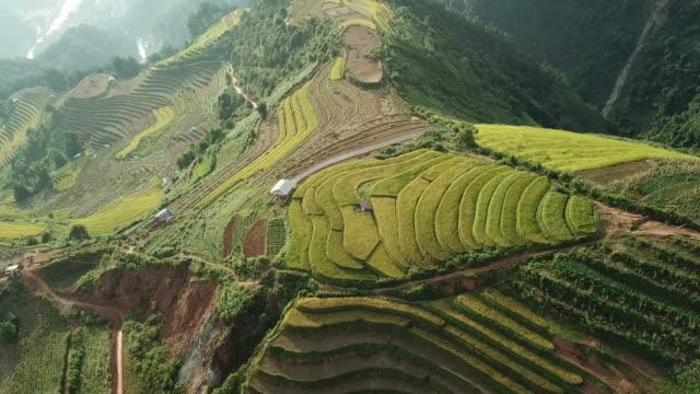 stockvideo's en b-roll-footage met luchtfoto rijstvelden van boerderij op heuvelachtig of bergachtig terrein, beautiful landschapsmening rijstvelden mu cang chai op vietnam, landbouw oogst padiegebieden terrassen is landbouw traditionele in zuidoost-azië - rice terrace