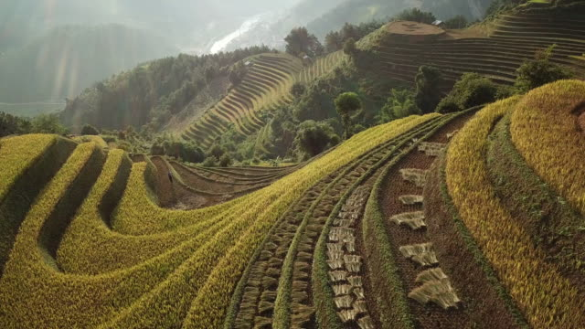aerial view rice terraces of farm on hilly or mountainous terrain,beautiful landscape view of rice terrace in mu cang chai at vietnam , agriculture harvest paddy fields terraces is farming traditional in southeast asia - village stock videos & royalty-free footage