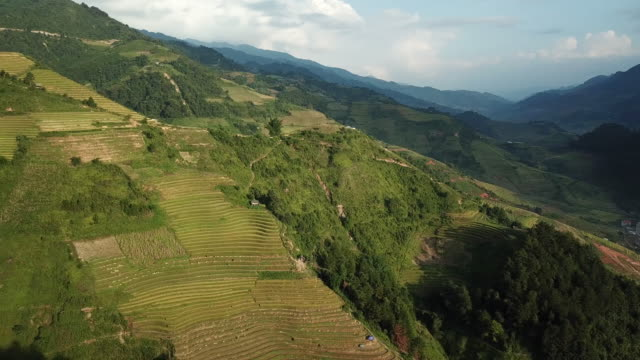 aerial view rice terraces of farm on hilly or mountainous terrain,beautiful landscape view of rice terrace in mu cang chai at vietnam , agriculture harvest paddy fields terraces is farming traditional in southeast asia - luzon stock videos & royalty-free footage