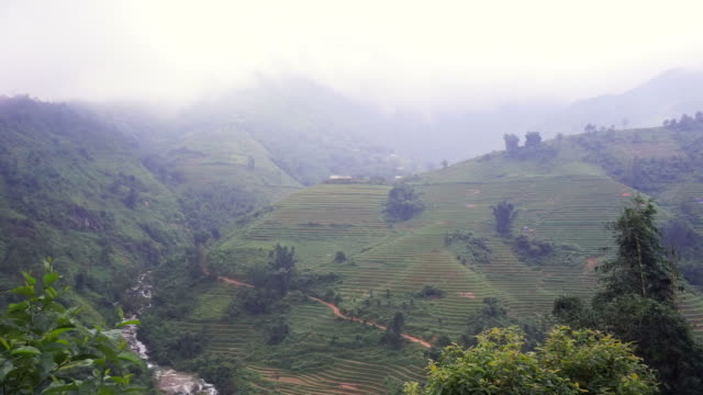 Aerial view Rice terraces of farm on mountainous terrain,Beautiful landscape view of rice terrace in Vietnam