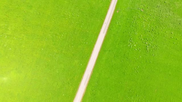 aerial view: road on green meadow - zona erbosa video stock e b–roll