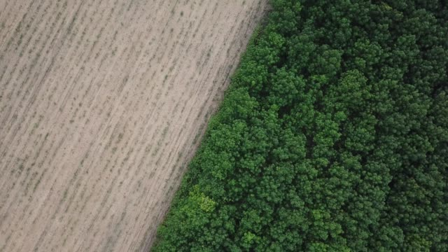 aerial view - rubber tree plantation. - rubber tree stock videos & royalty-free footage