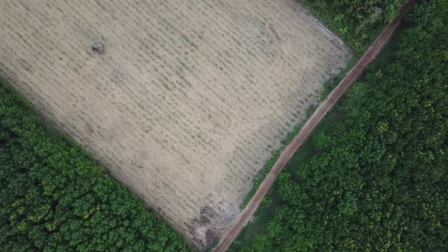 stockvideo's en b-roll-footage met luchtfoto - rubber boom plantage. - vlakte