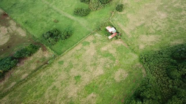 aerial view: rural landscape with fields, building & two cows - rustic stock videos & royalty-free footage