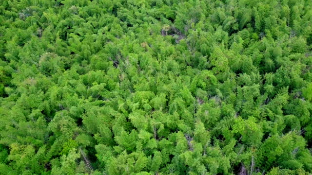 aerial view shot of rainforest in thailand - environmentalist stock videos & royalty-free footage