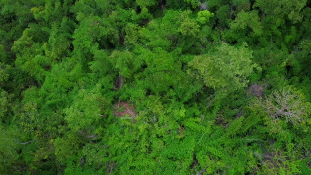 aerial view shot of rainforest in thailand - air to air shot stock videos & royalty-free footage